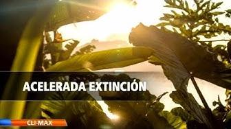 Expertos alertan sexta extinción masiva de plantas