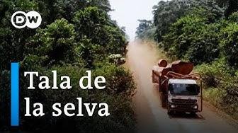 Una selva ecológica, ¿es posible? | DW Documental