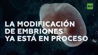 Embriones híbridos entre roedores y humanos