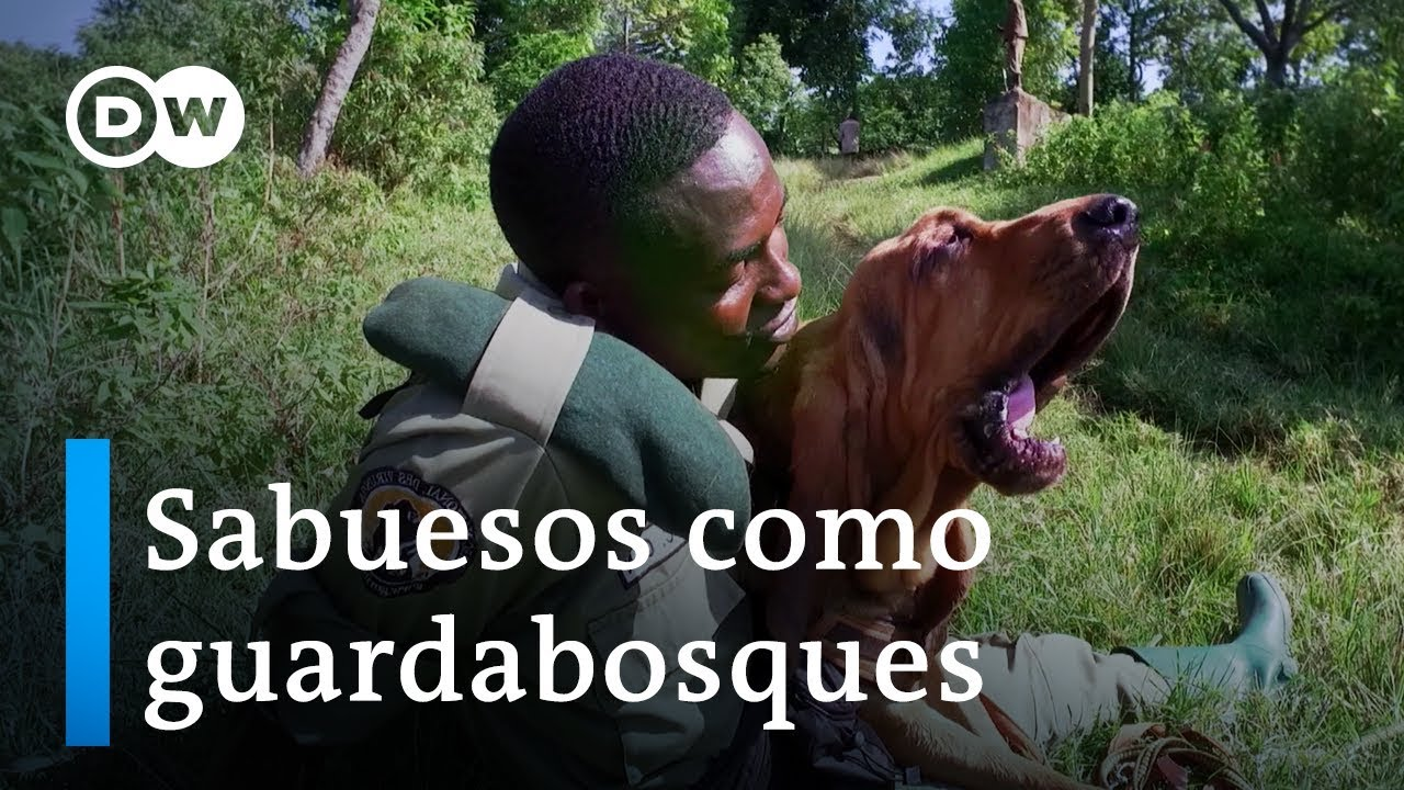 Escuadrón canino en África – La belleza de las bestias   DW Documental